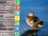 A brown duck and a Pile of Newspapers Recycle Theme — Stock Photo