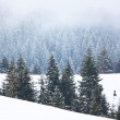 Fog in winter forest in mountain — Stock Photo