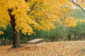Picnic table under a beautiful yellow maple tree — Stock Photo