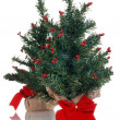 Two fake mini christmas trees — Stock Photo #4428642
