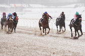 Winter horse racing — Stock Photo