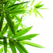 Stock Photo: Green bamboo leaves