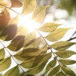 Warm sunshine with green leaf - Stock Photo