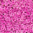 Stock Photo: Beautiful pink rose background