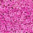 Beautiful pink rose background — Stock Photo