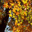 Autumn maple leaf with sunshine — Stock Photo