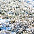 Frost on the ground — Stock Photo