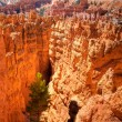 Bryce Canyon — Stock Photo #4489622