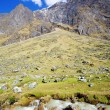 Peruvian Andes — Stock Photo