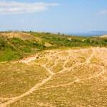 Michigan dunes — Stock Photo