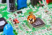 Computer bug — Stockfoto