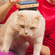 Stock Photo: Grooming Cat Brush