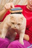 Kot oporządzanie konia szczotka — Zdjęcie stockowe
