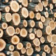 Pile Of Wood — Stock Photo #5375762