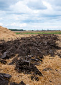 Arable earth — Stock Photo