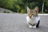 Stray kitten — Stock Photo