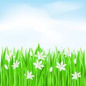 Groen gras met witte bloemen — Stockvector