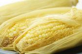 Sweet yellow corn — Stock Photo