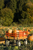 Pumpkin harvest — Stock Photo