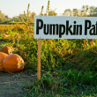 Pumpkin patch — Stock Photo #5453130