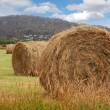 Hay bales — Stock Photo #4281648