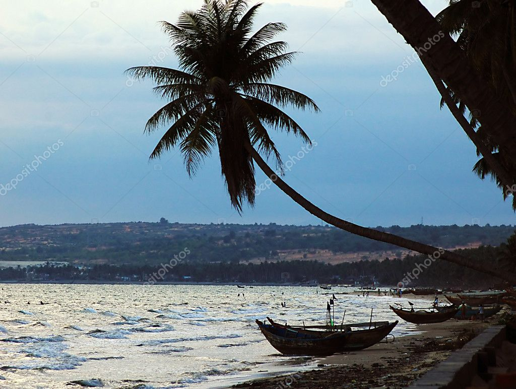 palm trees boat - photo #49