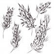 Wheat symbol sketch — Image vectorielle