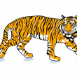 Stock Vector: Sneak Tiger