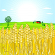 Stock Vector: Grain-field