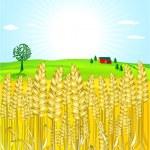 Grain-field — Stock Vector #4158677
