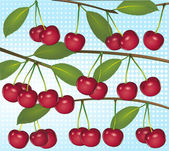 Cherries on light blue background — Vector de stock