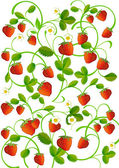 Strawberry leaves with berries — Stock Vector