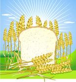 Bread and grain — Stock Vector