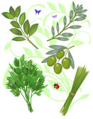 Green herbs — Vetorial Stock