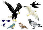 Birds on white — Stock Vector