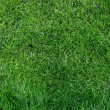 Royalty-Free Stock Photo: Close-up green grass