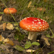 Stock Photo: Toadstool at the forest
