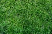 Close-up green grass — Stock Photo