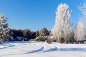 在冬季,美丽的森林 — 图库照片