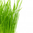 Stock Photo: Isolated green grass