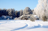 Forest in winter, beautiful — Stock Photo