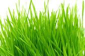 孤立的绿草 — 图库照片