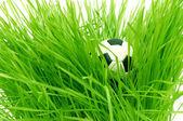 在与文本区域 copyspace 的绿色草地上足球 — 图库照片