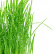 Stock Photo: Green grass Isolated