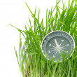 Compass in green grass — Stock Photo #5174534