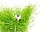Football on green grass — Stock Photo