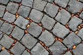 Acorns on the pavement — Stock Photo