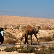 Stock Photo: Camel on parallel road