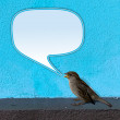 Bird twittering - Stock Photo