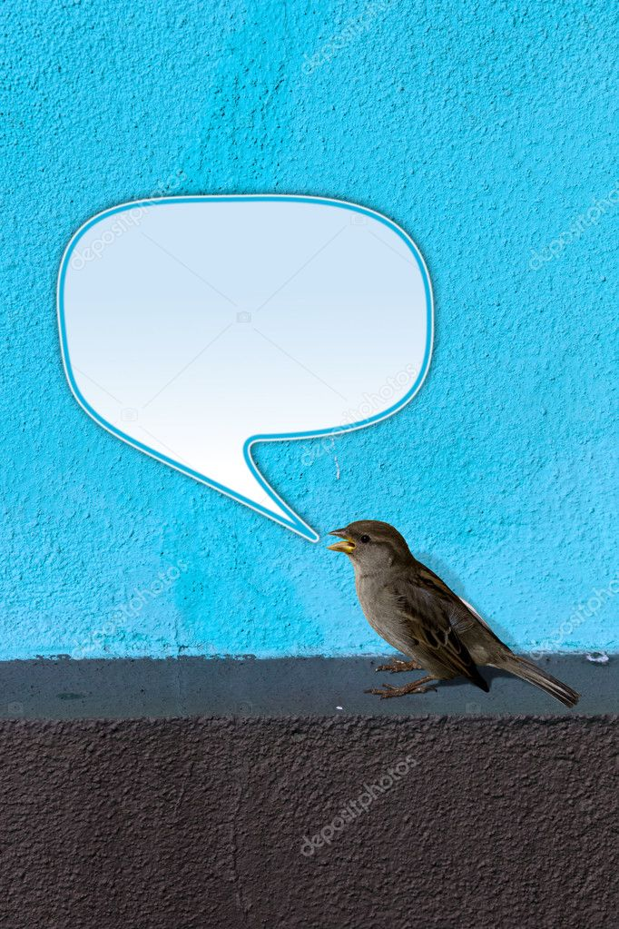 House Sparrow (Passer domesticus) on blue Wall twittering with empty text bubble. — Stockfoto #4049481
